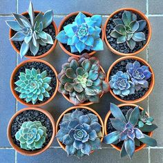 Group shots are just so much fun! It's like errrrbody is in da house  #cactus #cactuslove #succulent #succulove #desert #plant #nature #leaveonlyleaves #leafandclay #jungalowstyle #succulents #flower #flowerlove #garden #plants #instagood #photoftheday #picoftheday #instalike  #beautiful #green #cactusrepost #bestoftheday #cactusmovement #cactusclub #cacti #suckerforsucculents #love