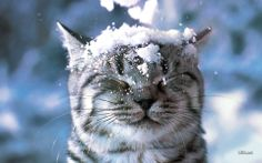 Cute kitten in the snow.