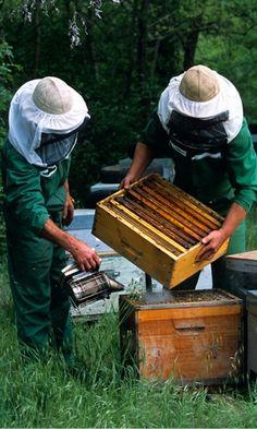 Le miel.  L'or liquide de la Provence...
