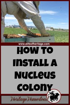 "Bees | How to Bees | Bee Care | How to Install a Nucleus Colony | Print out the FREE printable on ""how to install a nucleus colony"" and watch the video provided to see how I installed my nuc."