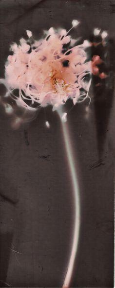 Lumen Print by Silvino González Morales