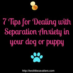 7 tips for dealing with separation anxiety in your dog or puppy #dogs #puppies