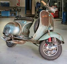 Amazing rat Vespa