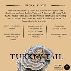 Turkey Tail Benefits, mushrooms, herbal medicine, apothecary Healing Herbs, Medicinal Plants, Natural Medicine, Herbal Medicine, Natural Cures, Natural Healing, Herbal Remedies, Health Remedies, Edible Wild Plants