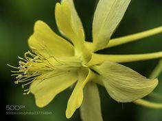 Yellow fantasy ...