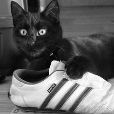 The Cat like shoes