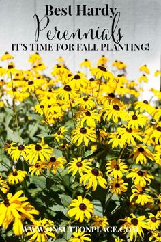 5 Best Hardy Perennials | Tips from a DIY Gardener | On Sutton Place