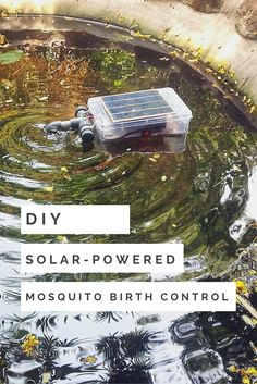 DIY Solar-Powered Mosquito Birth Control - This DIY device generates air bubbles at regular intervals and effectively produces ripples up to a radius of 2 meters keeping the water moving, oxygenated and preventing mosquito larvae from hatching.