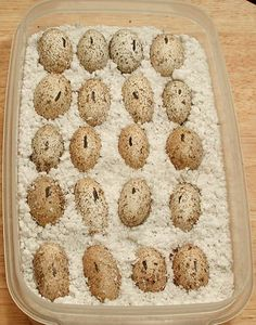 Albey's How To Incubate Leopard Gecko Eggs