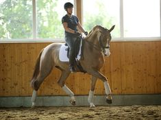 Developing Elasticity in the Dressage Horse with Isabell Werth. How elasticity and suppleness allow your horse to do his job well Equestrian Decor, Equestrian Outfits, Equestrian Style, Equestrian Fashion, Equestrian Problems, Horse Riding Tips, Horse Tips, Riding Gear, Trail Riding