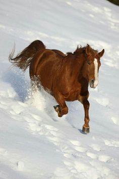 Beautiful horse running on the snow.