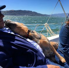 Brody dog making friends while on an sf bay yacht charter # Sailing Charters, Charter Boat, San Francisco, Dog, Friends, Amigos, Boyfriends, Doggies, Dogs