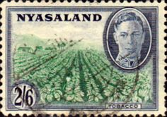 Nyasaland 1945 SG 149 Tobbaco Plantation Fine Used SG 149 Scott 73 Other African Postage Stamps HERE