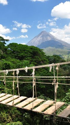 Costa Rica Rope Bridge iPhone 5 wallpapers, backgrounds, 640 x 1136