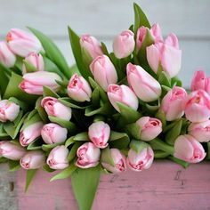 #Pink #tulips