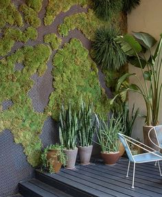 Patio garden with potted plants and moss wall Moss Garden, Garden Art, Garden Design, Home And Garden, Succulent Planters, Succulents Garden, Hanging Planters, Vertikal Garden, Living Haus