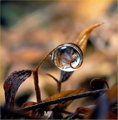 Natures Magic Crystal Ball Raindrop. Nature Photography.