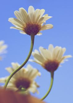 550d - Earth laughs in Flowers  via Flickr