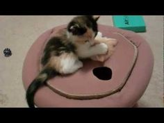 Crazy Kittens - so funny and cute!