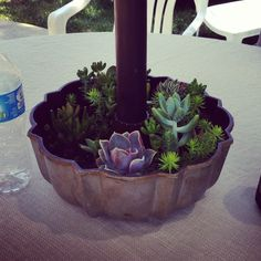 An old bundt cake pan is perfect for succulents around an umbrella!
