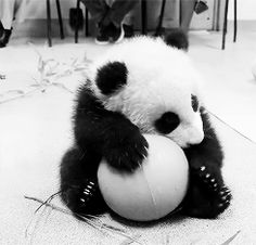 Cute Panda Playing with a Ball.