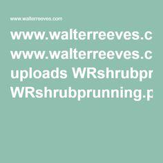 www.walterreeves.com uploads WRshrubprunning.pdf