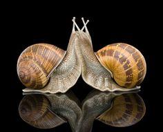 hyperréalisme d'hier et aujourd'hui: Sam Jinks Wassily Kandinsky, Snail Art, Melbourne Art, Mixed Media Sculpture, Snail Shell, Plastic Art, Bugs And Insects, Tier Fotos, Fauna