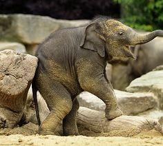 Olifanten dierenpark emmen