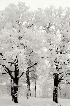 ^Black and White Winter