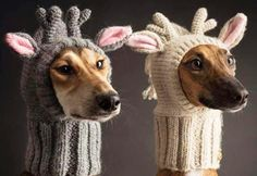 22 Animals Just Trying to Stay Warm This Winter