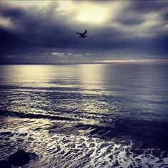 good morning. (at Malibu Beach Inn)
