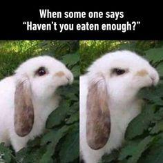 No, I haven't.