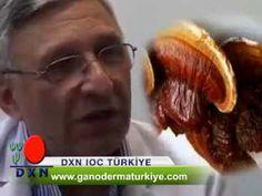 Dr. Soner Dileklen Reishi Mantarı-www.ganodermaturkiye.com 0850 808 26 76