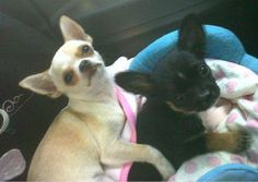 Hello cute doggies! Enter your pet to win a share of R101 000! #SouthAfrica only. #Pet competition. mymostbeautiful.com/