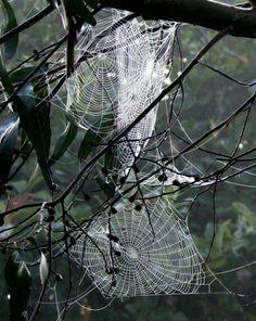 Astonishing Photographs of Spider Webs   *g