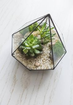 Stylish wedding and home decor. Glass Terrarium, Unusual Gifts, Decorating Your Home, Stained Glass, Succulents, Candle Holders, Vase, Make It Yourself, Fruit