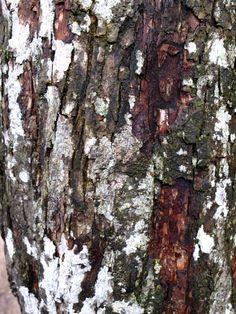 Tree // Plitvice, Croatia.