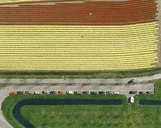 Image result for tulpenvelden nederland