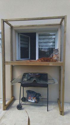 Terrasse à chat