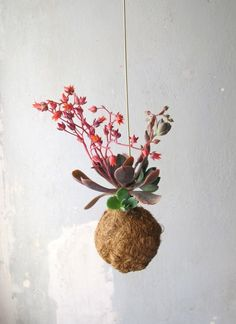 """GO TO SHOP Planteplaneter are small """"planets"""" of soil with succulents growing out of them, designed to hang from windows, ceilings, furniture etc. The design of the Planteplaneter is based on… Air Plants, Garden Plants, Indoor Plants, Green Rooms, Art Of Living, Container Plants, Beautiful Flowers, Planets, Planter Pots"""