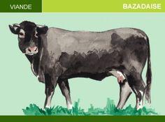 Bazadaise