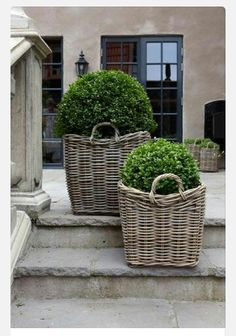 Boxwoods in grey rattan baskets