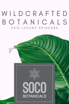 Switch from face creams to our eco-luxury face oils and notice visible improvement in moisture, health, elasticity, wrinkle repair and scar diminishing. Natural Organic Makeup, Organic Beauty, Natural Skin Care, Natural Beauty, Anti Aging Tips, Best Anti Aging, Face Skin Care, Diy Skin Care, Eco Beauty