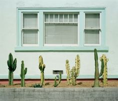"Mid century modern // Palm Springs // cactus // ... via ""The Hunter And Gatherer: CURRENTLY INSPIRED BY: THE VINTAGE, THE SURREAL, THE TROPICAL"""