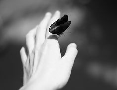 Butterfly / Black and White Photography Black N White, Black And White Pictures, White Art, Foto Art, Belle Photo, Black And White Photography, Best Quotes, In This Moment, Feelings