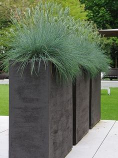 ideas for the front yard: Large planters. Landscaping ideas for the front yard: Large planters.Landscaping ideas for the front yard: Large planters. Container Plants, Container Gardening, Grass Species, Contemporary Planters, Modern Planters, Rustic Planters, Large Planters, Outdoor Pots And Planters, Cheap Planters