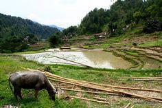 The beautiful Toraja. Sulawesi. Indonesia.