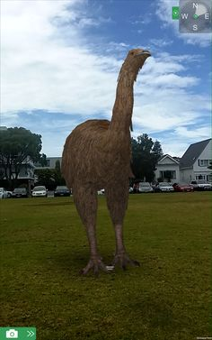 Moa wandering around in St Heliers using Augplay, which is a sister product of Augview using Augmented Reality to display our lovely big bird.  The Moa Park can be visited at the Otorohanga Kiwi House in New Zealand.