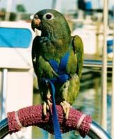 Use a harness and leash combination to keep your bird safe when outdoors.