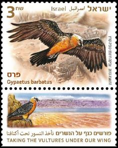 bearded vulture on stamps - Google zoeken